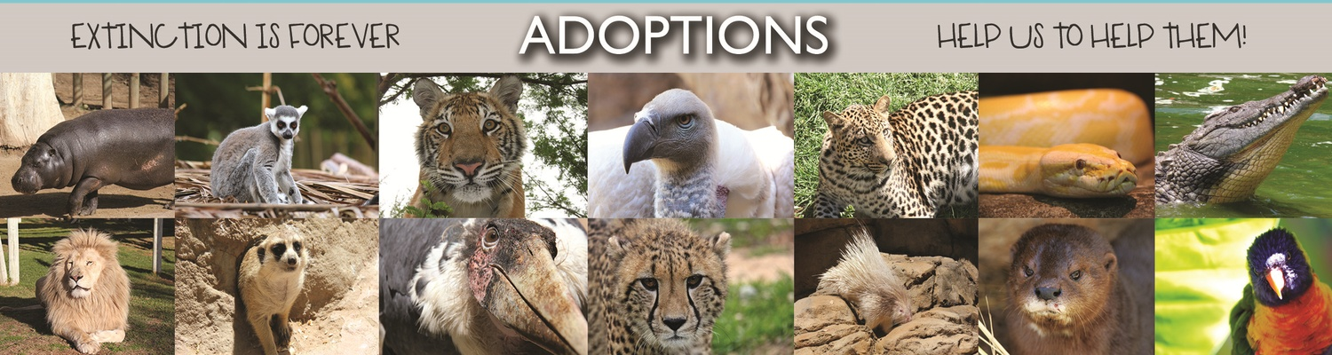 Adoptions, Cango Wildlife Ranch, Contributions