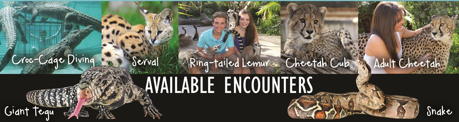 Animal Encounters, Wildlife, Experience, Cheetah, Crocodile, Snake, Ring-Tailed Lemur, Serval, Tegu