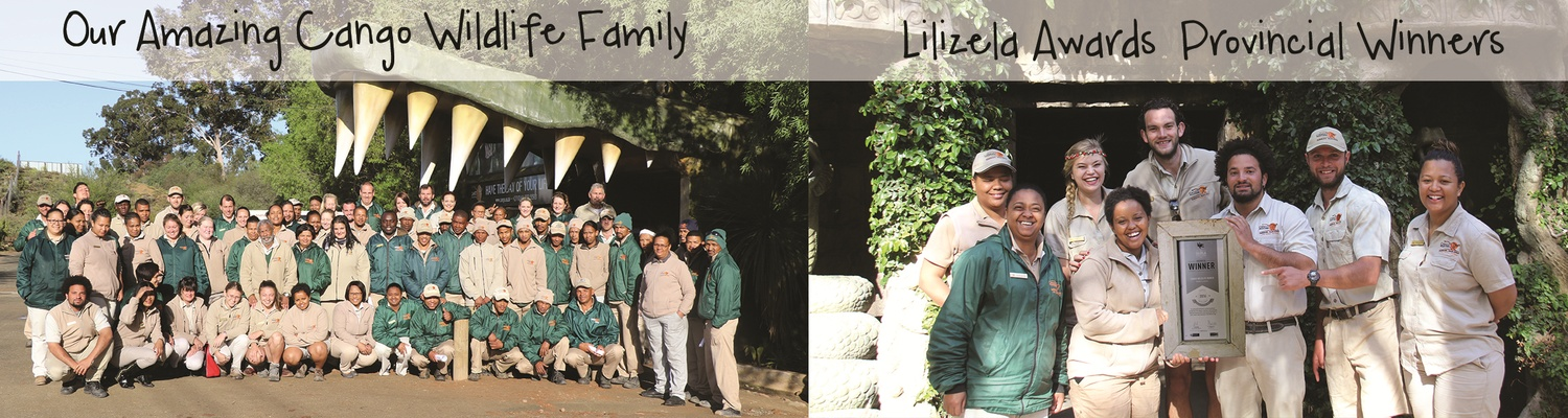 Work Family, Lilizela Awards, Cango Wildlife Ranch