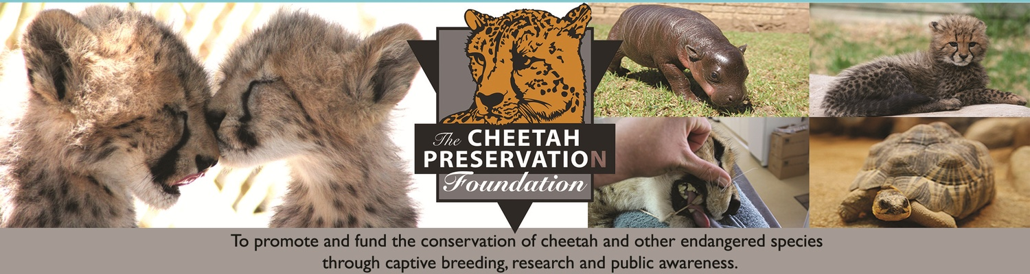 Cheetah Preservation, Conservation, Cheetah